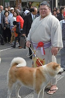 Takekaze Akira Sumo wrestler