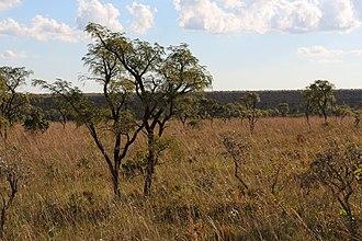 Emas National Park - Image: Cerrado Campo Sujo