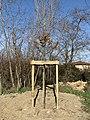 Chêne offert par l'association des maires de France planté par Henry Peyrelongue (2021-02-20).jpg