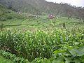 Chalise, Majhuwa 45900, Nepal - panoramio (1).jpg