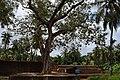 Chemmanthatta Mahadeva Temple DSC 0673.JPG