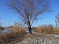 Cherkas'kyi district, Cherkas'ka oblast, Ukraine - panoramio (800).jpg