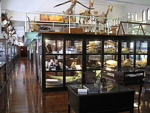 Chulalongkorn University Museum of Natural History main room.JPG