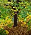 """Cincinnati - Spring Grove Cemetery & Arboretum """"Enter Autumn"""" (10698871666).jpg"""