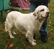 Gifts for Clumber Spaniel Dog Lovers
