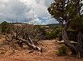 Colorado National Monument (d567f645-c61d-4c0d-b320-d3d3568eb439).jpg