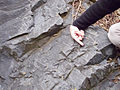 Conococheague Formation - Crossbedding (4801523277).jpg