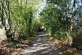 Cooper's Lane - geograph.org.uk - 1549207.jpg