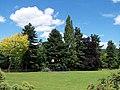 Coronation Park Trees, Oughtibridge - 1 - geograph.org.uk - 1114026.jpg