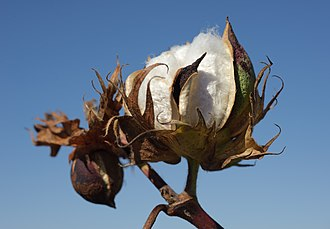 Defoliant - Defoliants are used as an aid in the harvesting of certain crops such as cotton.