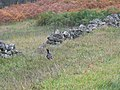 Countryside Over Bohespic. - geograph.org.uk - 263316.jpg