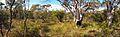 Couranga Track - panoramio (27).jpg