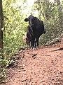 Cow cool.jpg