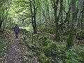 Cressbrook Dale, Wood. - geograph.org.uk - 270446.jpg