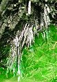 Cuprosklodowskite-Vandenbrandeite-rad08-09d.jpg