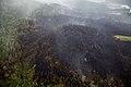Currant Creek Fire, 6-27 NPS Photo Yasunori Matsu (9158619951).jpg