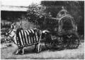 D179- chariot indien pour les femmes -liv2-ch12.png