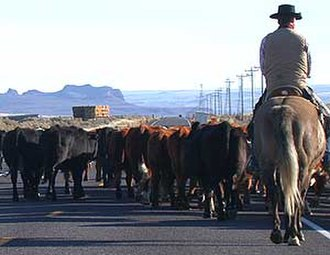 Silver Lake, Oregon - Cowboy herding cattle on Highway 31 near Silver Lake