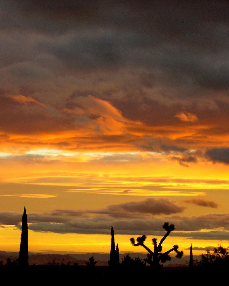 Dawn 1.jpg