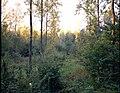 De Demervallei , populierenaanplanting te Vorsdonk - Broek - 354927 - onroerenderfgoed.jpg
