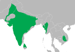 Dendrocopos mahrattensis distribution map.png