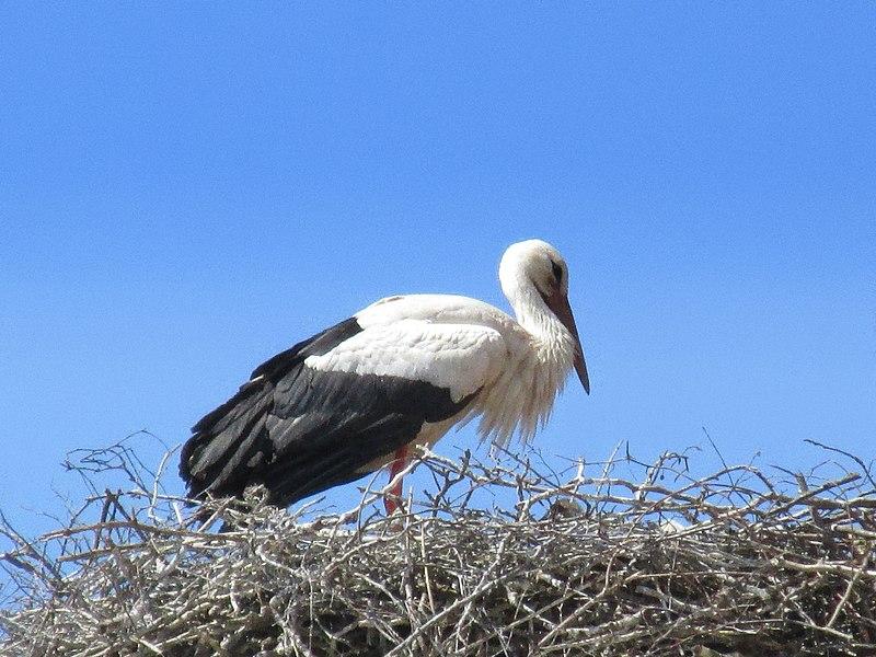 File:Der Storch ist das Symbol für das Elsass - panoramio.jpg