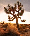 Desert Twilight (8742568551).jpg