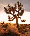 Desert Twilight (8742568551).jpg