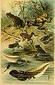 Deutschlands Amphibien und Reptilien. Eine Beschreibung und Schilderung sämmtlicher in Deutschland und den angrenzenden Gebietan vrokommenden Lurche und Kreichthiere (1897) (20878867672).jpg