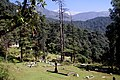 Dharamsala-St John in the Wilderness-22-Friedhof-gje.jpg