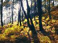 Digital Autumn - panoramio.jpg