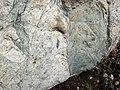Dikes intruding tillite (Nipissing Diabase & Gowganda Formation, Paleoproterozoic; Percival Lake roadcut, Ontario, Canada) 11 (47674709882).jpg