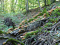 Dilijan National Park-Mushrooms (1).jpg