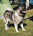 DocFile Greyhund.jpg