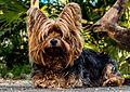 Dog-216282 640.jpg