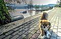 Dojran Lake 200.jpg