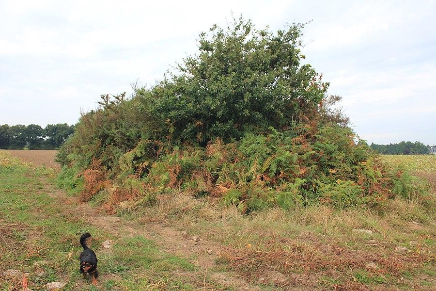 Dolmen de Nelhouët sous la végétation (entretient inexistant depuis plusieurs années) vue depuis le sud-est