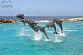 Dolphin Show.jpg