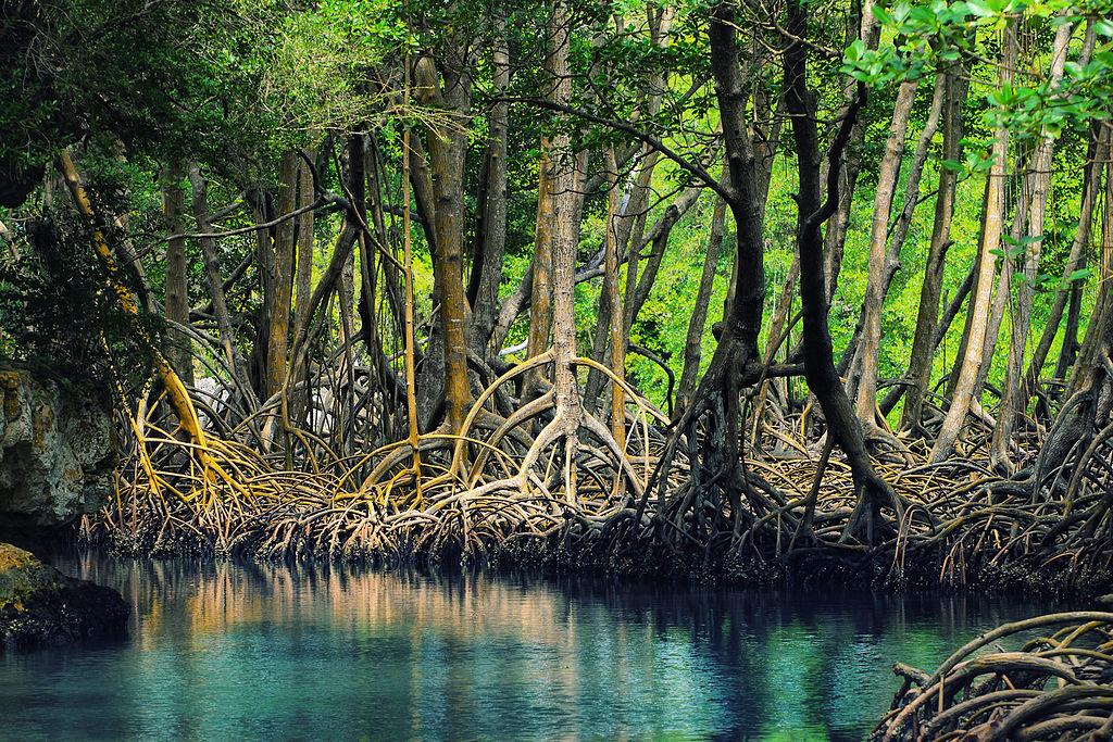 Lasy namorzynowe w parku narodowym Los Haitises