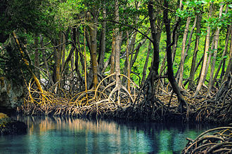 Mangroves in Los Haitises National Park Dominican republic Los Haitises mangroves.jpeg