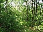 Dovhorakivskyi Botanical Reserve (2019.05.26) 08.jpg