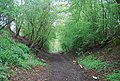 Downs Link in an old cutting - geograph.org.uk - 1878644.jpg