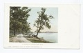 Driveway, Orchard Lake, Mich (NYPL b12647398-62634).tiff