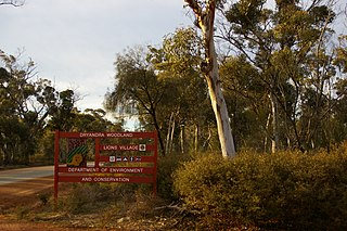 Dryandra Woodland nature conservation area in Western Australia