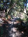 Dun Mountain Trail 14.JPG