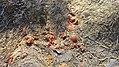 Durovdagh Necropolis18 by UZEYIR MIKAYIL.jpg