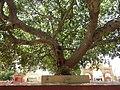 Dwaraka and around - during Dwaraka DWARASPDB 2015 (250).jpg