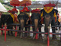 Elephants at Ayutthaya Elephant Camp.JPG