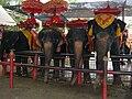 Elephants at Ayutthaya Elephant Camp.JPG