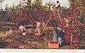 Ellinburg WA - Apple Orchard in the Famous Fruit Growing Kittitas Valley (NBY 432280).jpg